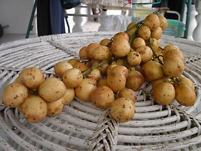 Rambai, super sour langsat-type fruit