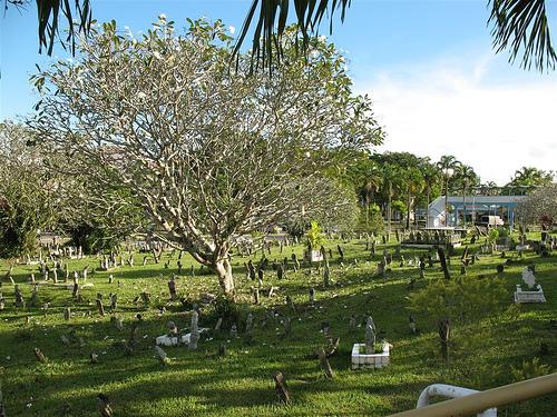 kubur grave kemboja plumeria frangipani