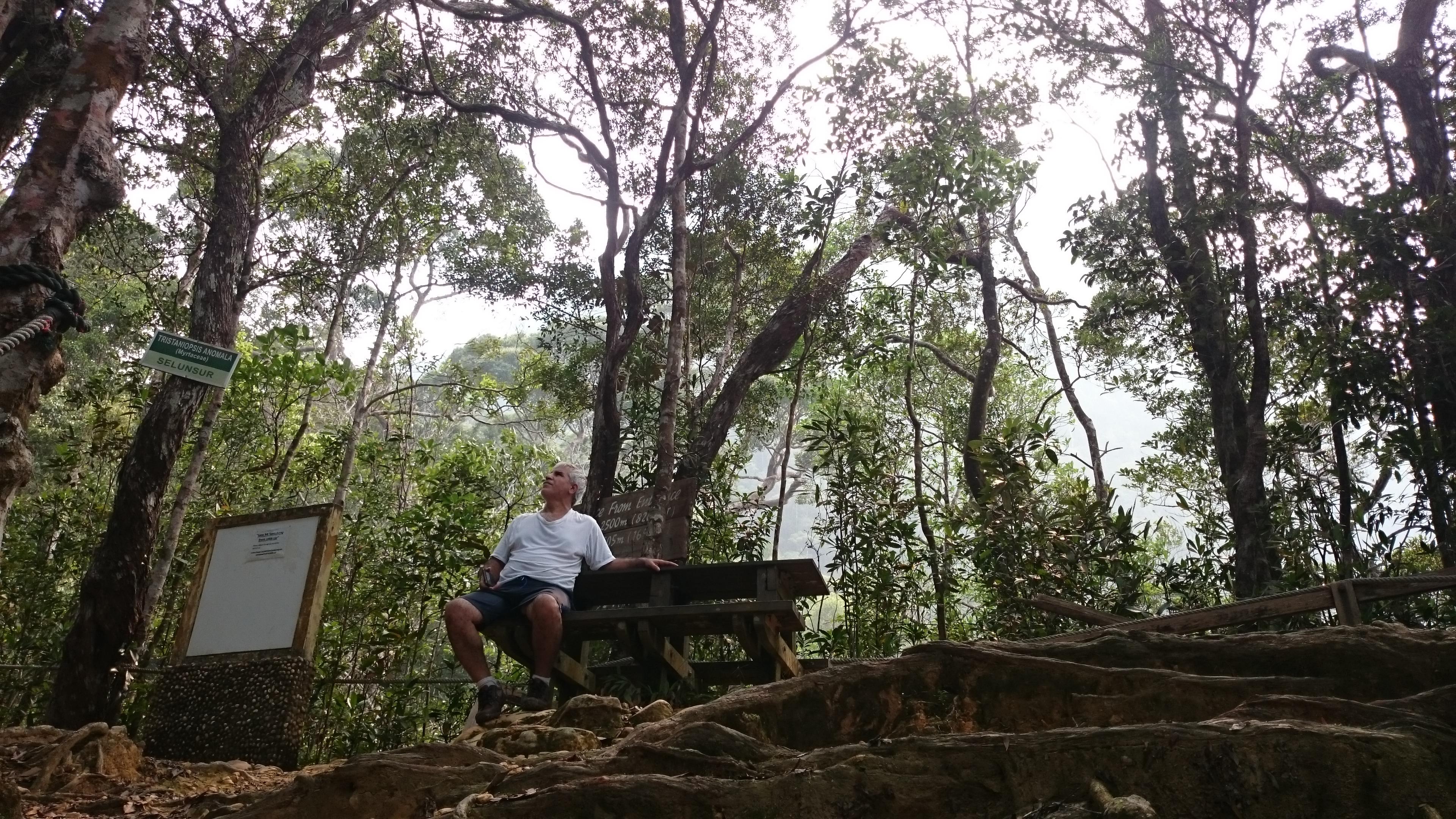 Mahmud_trees